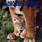 Resumen Corto Del Cuento Cachorro De Tigre